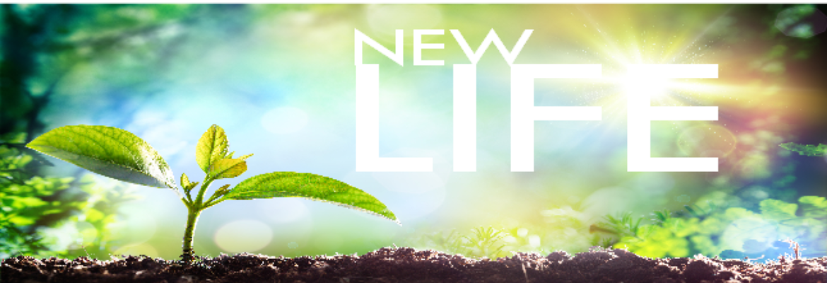 New Life Mennonite Church